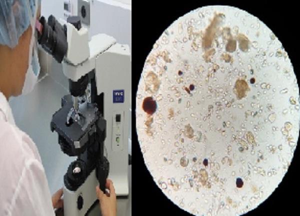 microscopio de campo brillante